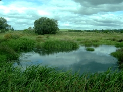 Retention ponds hold water run-off back and slowly release it to mitigate flooding
